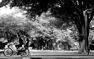 Passing Bicycle
