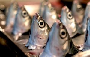 虱目魚の目