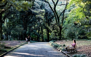 Path In Shinjuku Gyoen Park