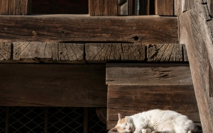 Cat On The Wooden Stair