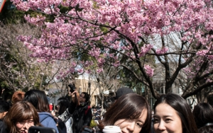 Cherry Blossoms And Selfie