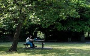 Reading Book Under Tree