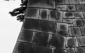 Pine Tree On Stone Wall