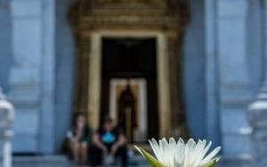 Lotus In Lak Mueang