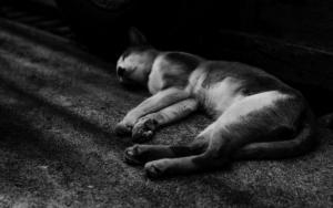 通路の隅で熟睡する猫